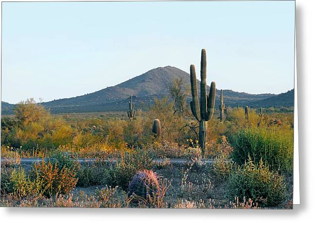 Cave Creek Western Greeting Cards - Summer Eve Greeting Card by Gordon Beck