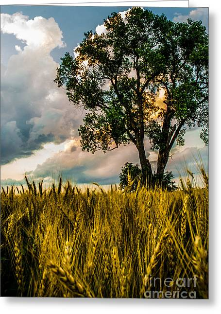 A Summer Evening Greeting Cards - Summer Evening After A Rain Greeting Card by Michael Arend