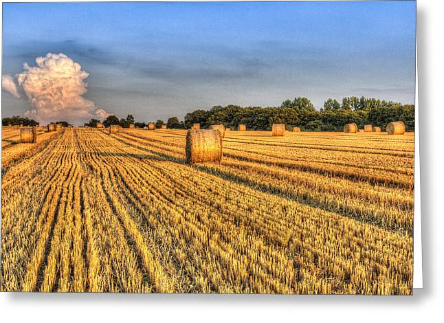 Farmers Field Greeting Cards - Summer Evening Farm Greeting Card by David Pyatt