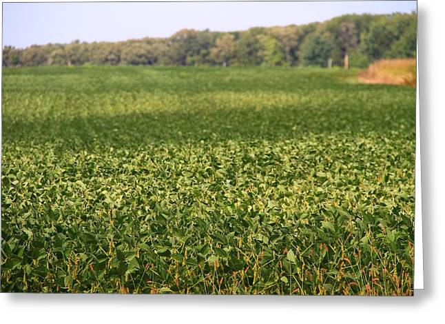 Green Beans Greeting Cards - Summer Farm Field Greeting Card by Dan Sproul