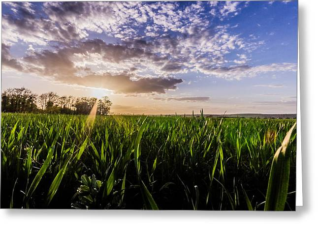 Warm Summer Greeting Cards - Summer fields Greeting Card by Ian Hufton