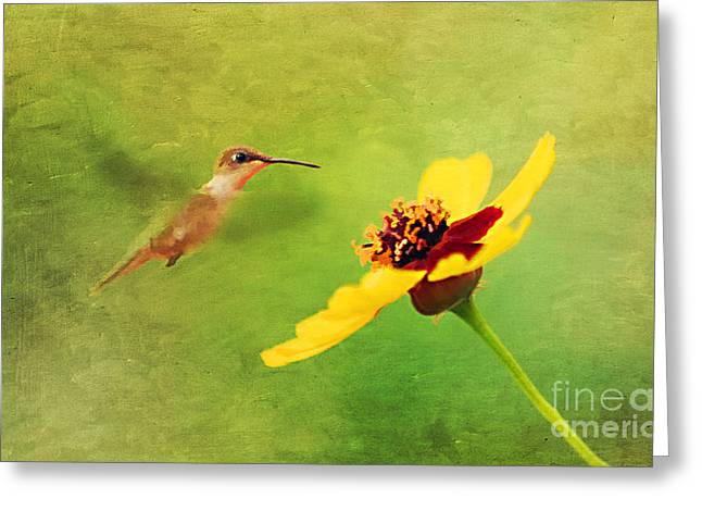 Summer Flight Greeting Card by Darren Fisher