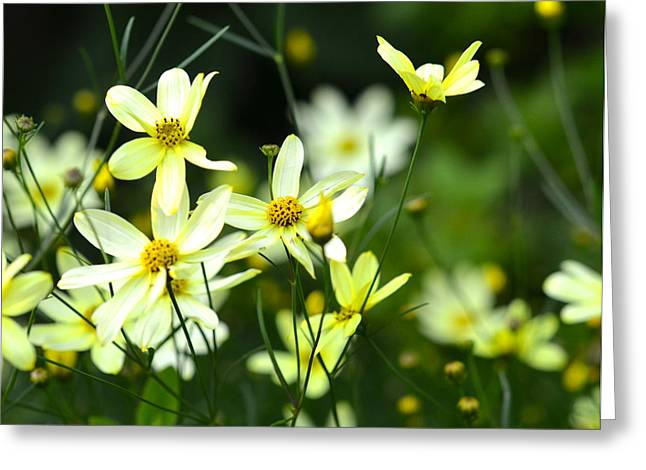 Dainty Greeting Cards - Summer Flowers Greeting Card by Corinne Rhode