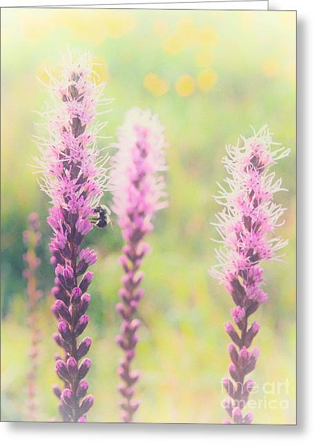 Paint Photograph Greeting Cards - Summer Flowers of the Blue Ridge Parkway II Greeting Card by Dan Carmichael