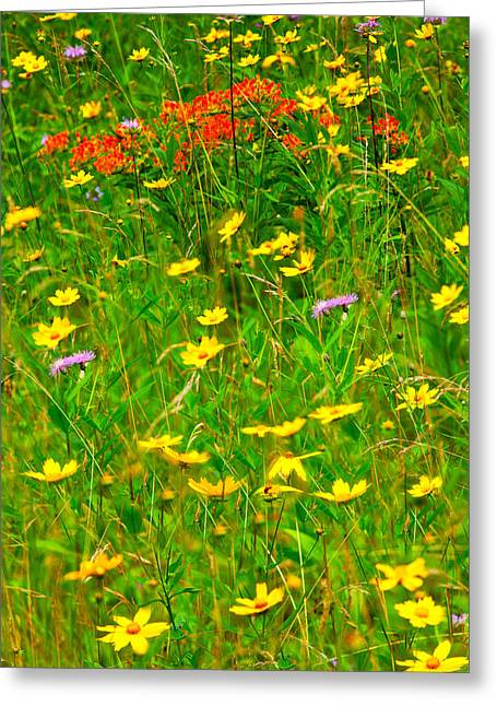 Summer Flowers On The Blue Ridge Parkway I Greeting Card by Dan Carmichael