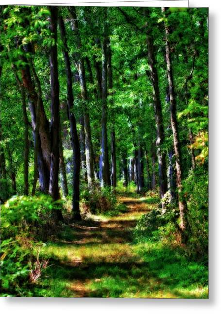 Summer Forest In Ohio Greeting Card by Dan Sproul