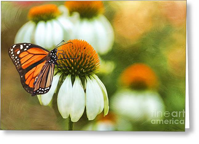Close Focus Floral Greeting Cards - Summer Garden Greeting Card by Darren Fisher