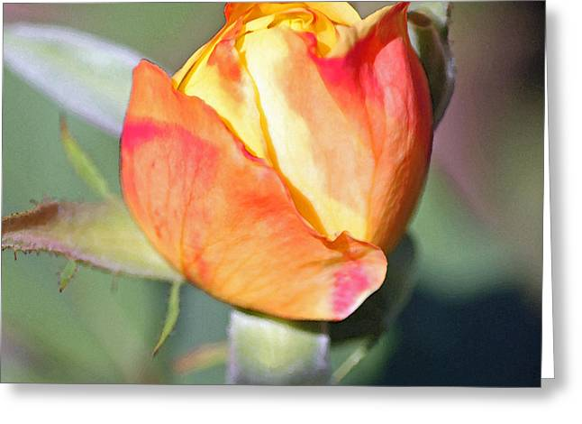 Photographs Digital Art Greeting Cards - Summer Garden III in Watercolor Greeting Card by Suzanne Gaff