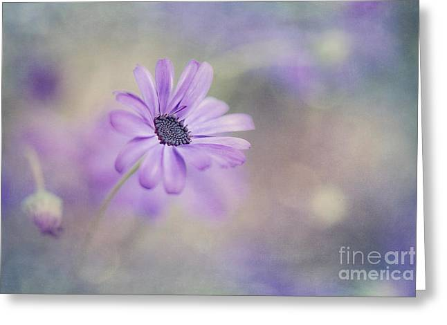 Tenderness Greeting Cards - Summer garden Greeting Card by Priska Wettstein