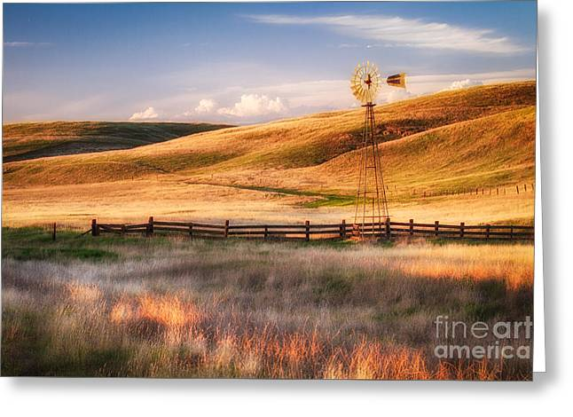 Summer Glow Greeting Card by Anthony Bonafede