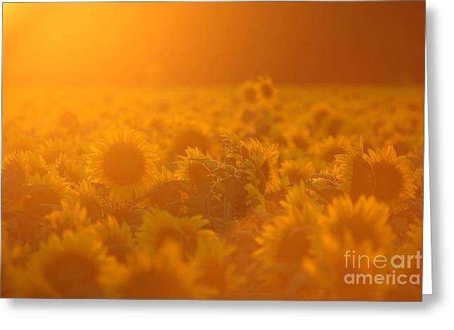 Warm Summer Greeting Cards - Summer Glow Greeting Card by Lisa Holmgreen