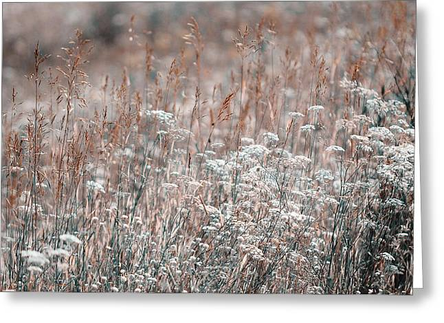 Meadow Willows Greeting Cards - Summer Grass. Nature in Alien Skin Greeting Card by Jenny Rainbow