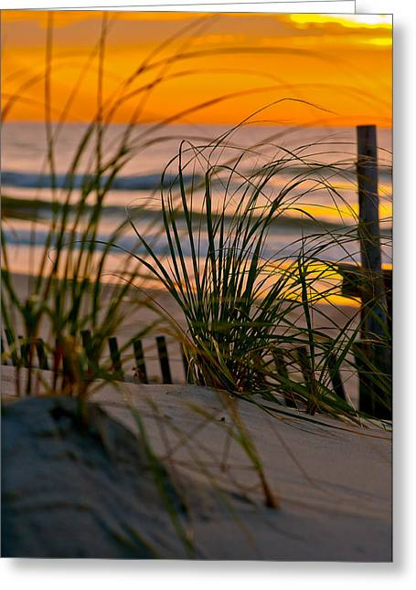 Sand Fences Greeting Cards - Summer Grasses Greeting Card by Scott Hafer