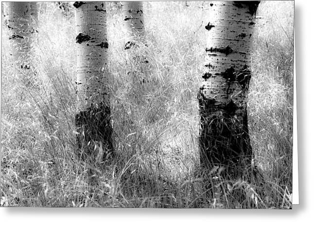 Quaking Aspen Greeting Cards - Summer Grasses Greeting Card by The Forests Edge Photography - Diane Sandoval