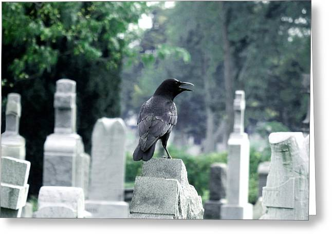 Gothicrow Greeting Cards - Summer Graveyard Greeting Card by Gothicolors Donna Snyder