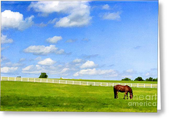Horse Breed Greeting Cards - Summer Grazing Greeting Card by Darren Fisher