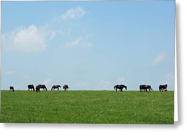 Keeneland Greeting Cards - Summer Grazing Greeting Card by Roger Potts