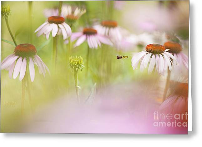 Close Focus Floral Greeting Cards - Summer Hover Greeting Card by Jacky Parker
