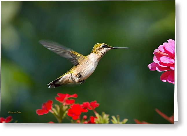 Hovering Greeting Cards - Summer Hummingbird Greeting Card by Christina Rollo