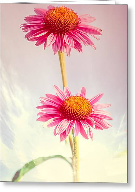 Cone Flowers Greeting Cards - Summer Impressions Cone flowers Greeting Card by Bob Orsillo