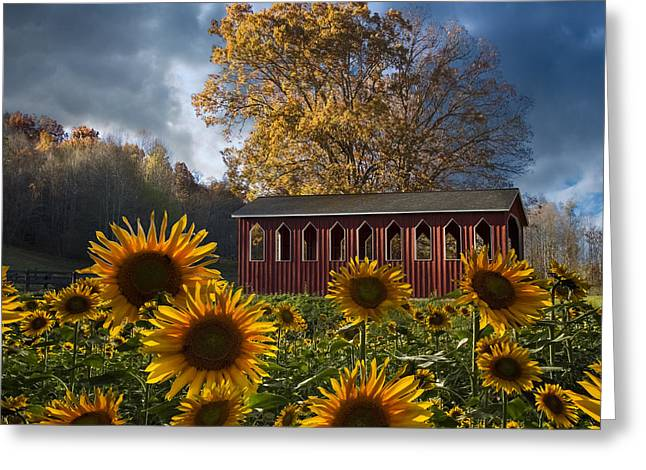 Swiss Photographs Greeting Cards - Summer in Sunflowers Greeting Card by Debra and Dave Vanderlaan