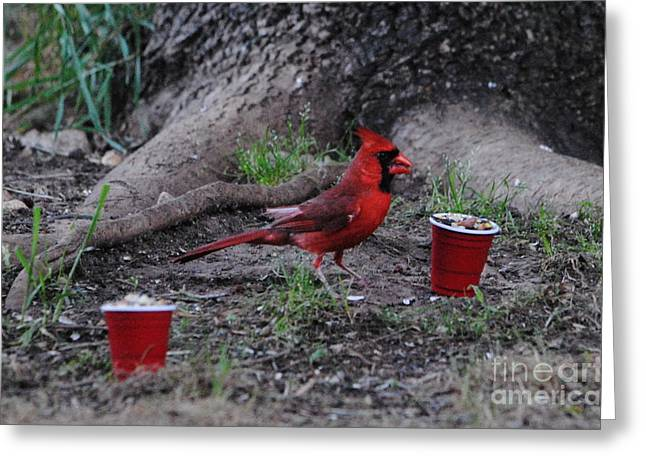 Cardinals Tradition Greeting Cards - Summer is Here Greeting Card by Paul Wesson