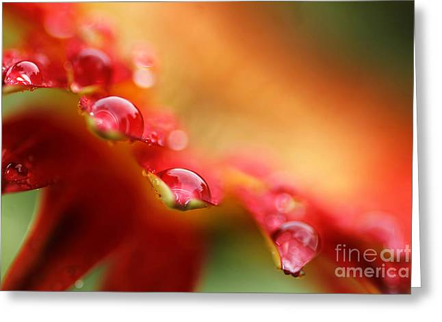 Zen-like Greeting Cards - Summer Jewels Greeting Card by Darren Fisher