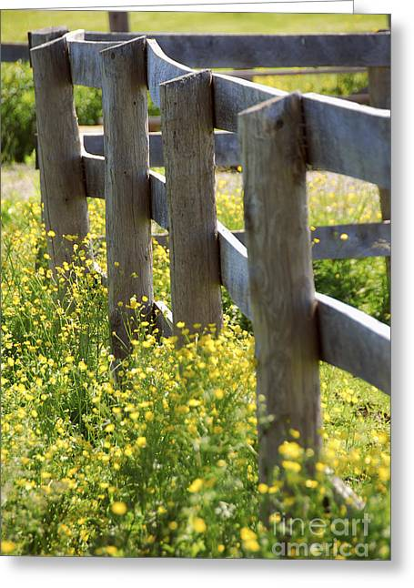 Buttercups Greeting Cards - Summer meadow Greeting Card by Elena Elisseeva