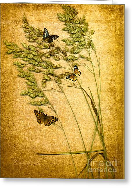 Insect Digital Greeting Cards - Summer Meadow Greeting Card by Jan Bickerton