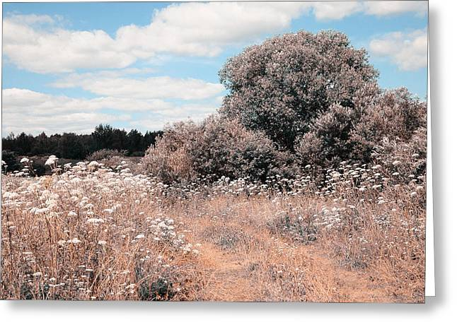 Meadow Willows Greeting Cards - Summer Meadow. Nature in Alien Skin Greeting Card by Jenny Rainbow