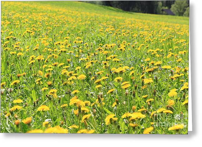 Polution Greeting Cards - Summer Meadow Of Dandelions Greeting Card by Ernst Cerjak