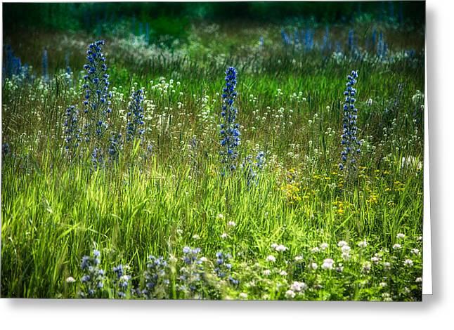 Garden Scene Digital Greeting Cards - Summer meadow of wild flowers Greeting Card by Eti Reid