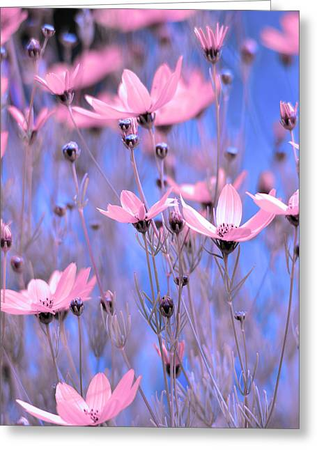 Sunlight On Flowers Greeting Cards - Summer meadow Greeting Card by Toppart Sweden