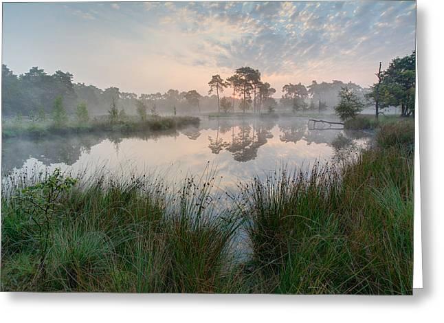 Fall Grass Greeting Cards - Summer Morning Greeting Card by Maxim Van Asseldonk