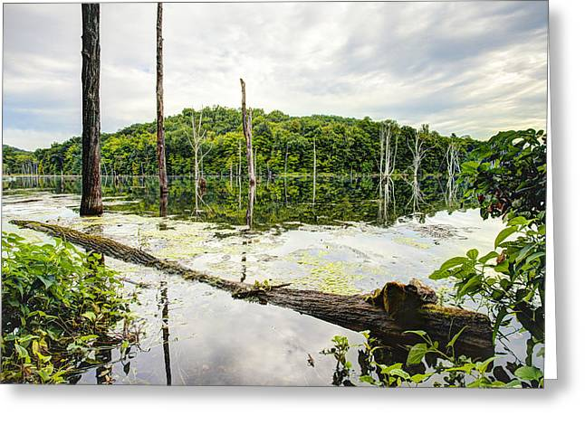 Reflection On Calm Pond Greeting Cards - Summer Morning on Monksville Reservoir 1 Greeting Card by Gary Heller