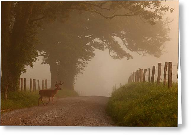 Gatlinburg Tennessee Greeting Cards - Summer Morning Stroll Greeting Card by Yoder Images