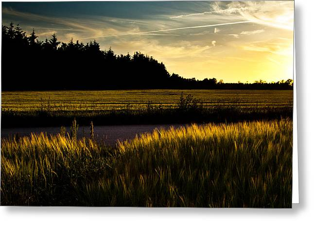 Road Pyrography Greeting Cards - Summer night i July Greeting Card by Michael  Bjerg