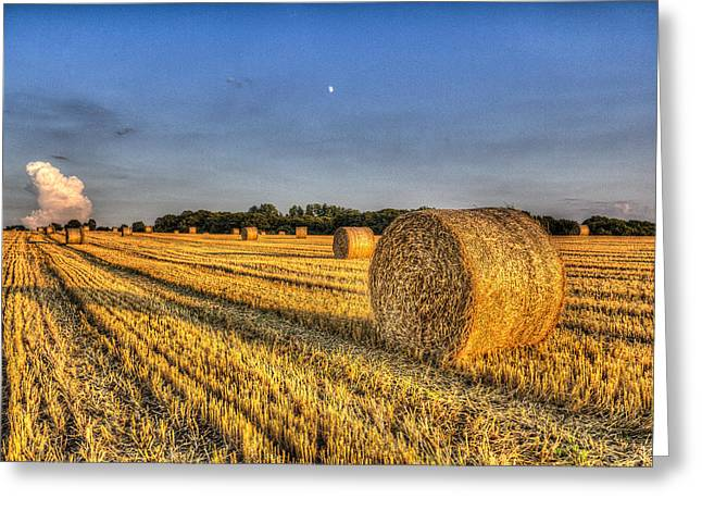 Farmers Field Greeting Cards - Summer on the farm Greeting Card by David Pyatt