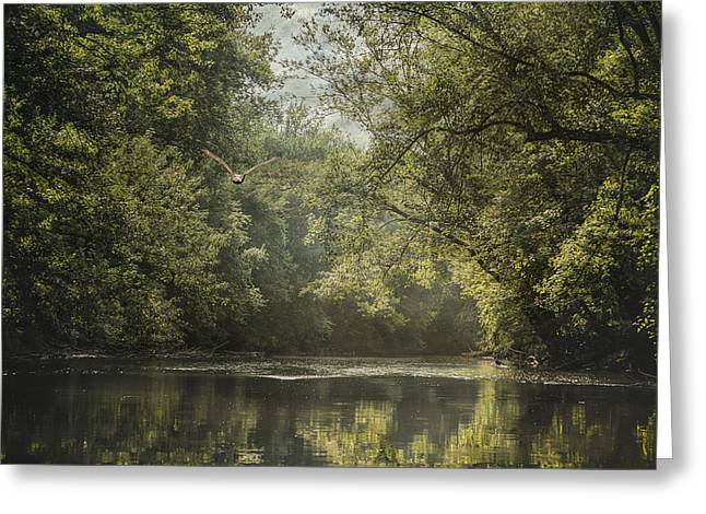 Eagles In Flight Greeting Cards - Summer On The River - Landscape - Trees Greeting Card by Sharon Norman