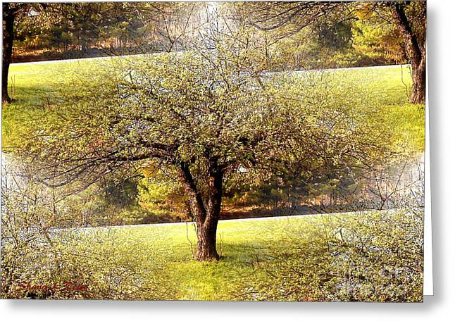 Rowe Digital Art Greeting Cards - Summer Orchard Greeting Card by Shana Rowe