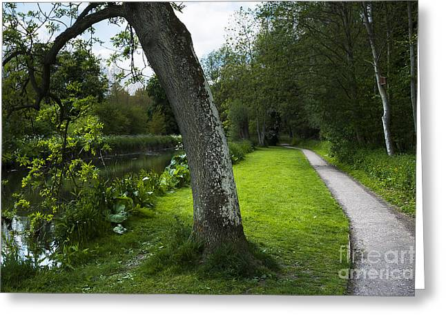 Beautiful Creek Greeting Cards - Summer Path Greeting Card by Svetlana Sewell