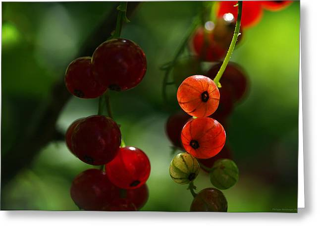 Frucht Greeting Cards - Summer pearls Greeting Card by Philippe Meisburger