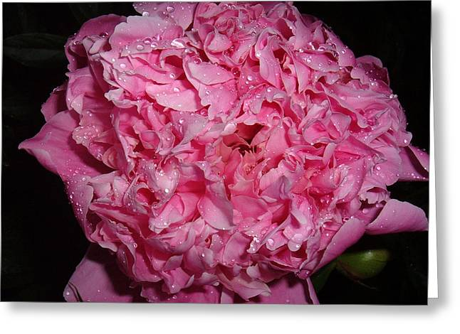 Dinner Party Invitation Greeting Cards - Summer  Peony Greeting Card by Melissa Sarat
