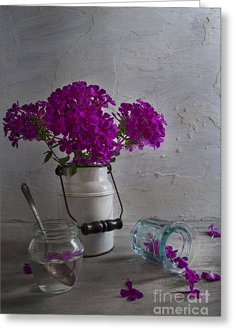 Phlox Greeting Cards - Summer Phlox Greeting Card by Elena Nosyreva