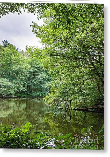 Cannock Chase Greeting Cards - Summer Pool Cannock Chase Greeting Card by Ann Garrett
