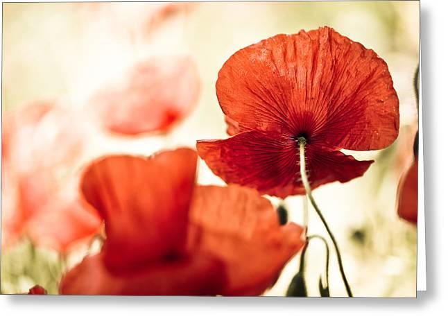 Sunlight Greeting Cards - Summer Poppy Greeting Card by Nailia Schwarz