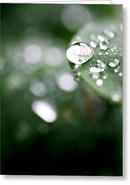Summer Rain Greeting Card by AR Annahita