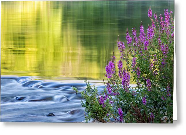 Connecticut Landscapes Greeting Cards - Summer Reflections Greeting Card by Bill  Wakeley