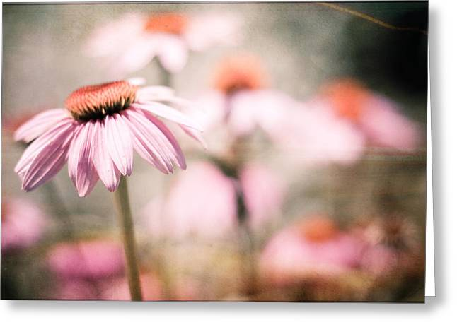 Joy Stclaire Greeting Cards - Summer Reveries Greeting Card by Joy StClaire