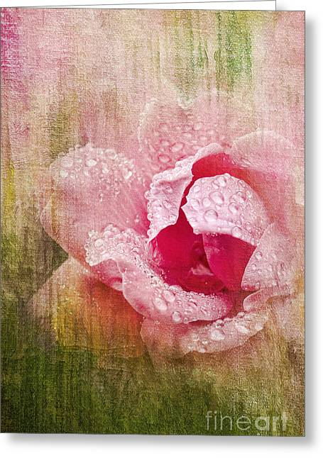 Summer Rose #2 Greeting Card by Betty LaRue